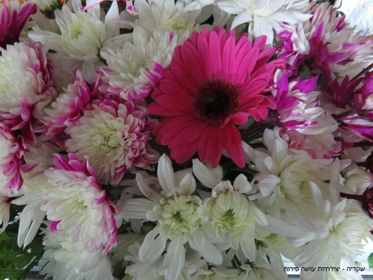 שקדיה - פרחים לחג השבועות